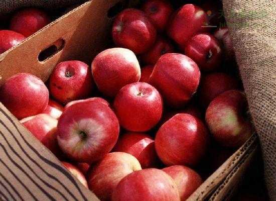 水果食用 早晨7点苹果最宜食 水果照着时间表吃